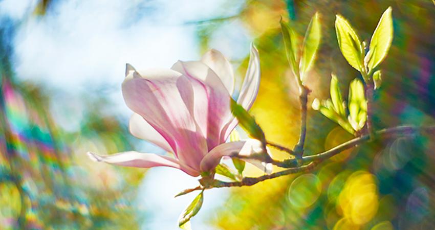 Yin Yoga Frühling